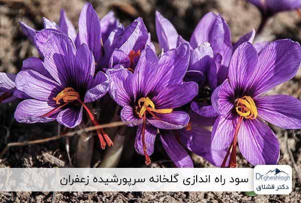 سود پرورش زعفران در گلخانه
