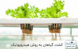 کشت هیدروپونیک گیاهان