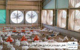 نقش تهویه در مرغداری های گوشتی و تخمگذار