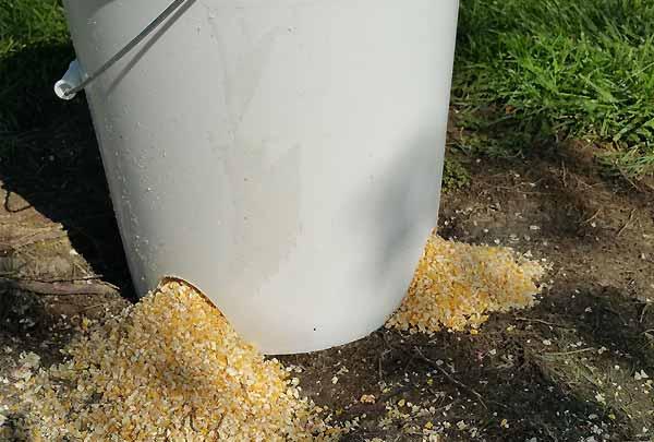 استفاده از سطل برای ساخت دانخوری