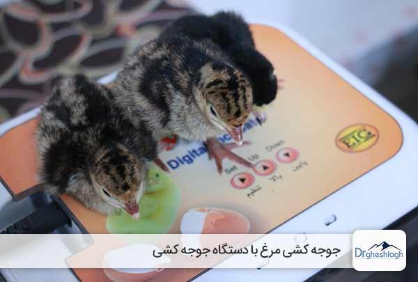جوجه کشی مرغ با دستگاه جوجه کشی - صنایع ماشین سازی دکتر قشلاق
