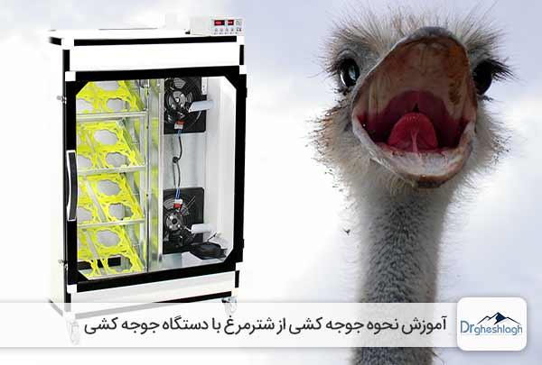 جوجه کشی از شترمرغ با دستگاه جوجه کشی-دکتر قشلاق