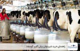راهنمای خرید شیردوش برقی گاو-صنایع ماشین سازی دکتر قشلاق
