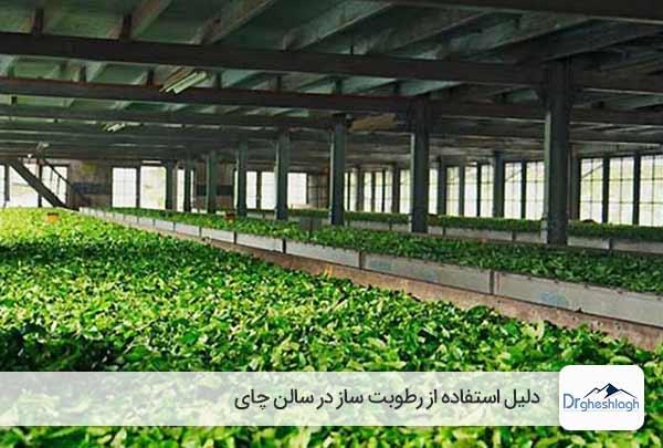 استفاده از رطوبت ساز در سالن چای-صنایع ماشین سازی دکتر قشلاق