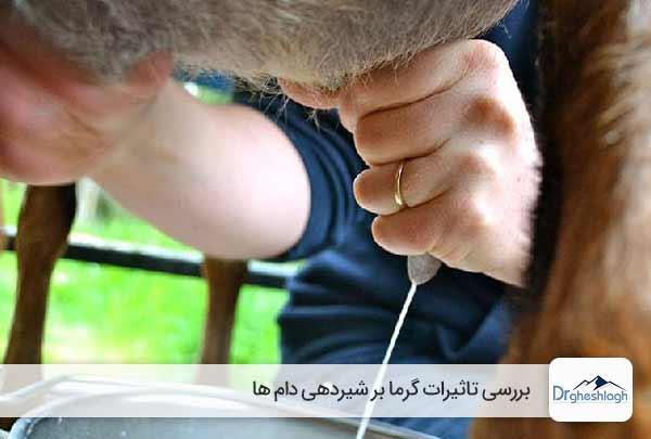 تاثیرات گرما بر شیردهی دام ها-دکتر قشلاق
