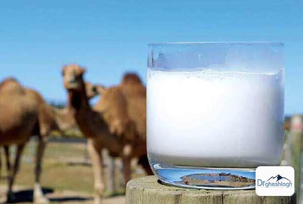 شیر و دوغ شتر-دکتر قشلاق
