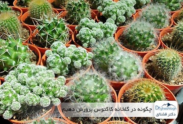 چگونه در گلخانه کاکتوس پرورش دهیم - دکتر قشلاق
