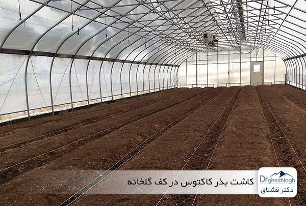 کاشت بذر کاکتوس در کف گلخانه - دکتر قشلاق