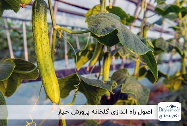 پرورش خیار در گلخانه