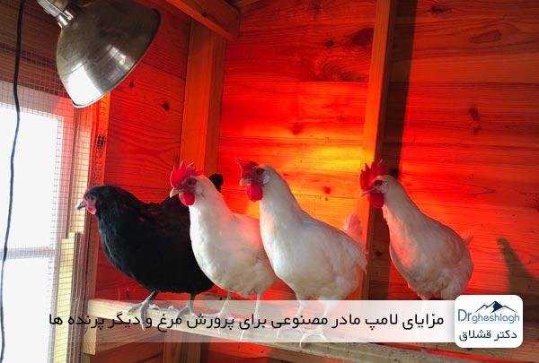 مزایای لامپ مادر مصنوعی برای پرورش مرغ و دیگر پرنده ها