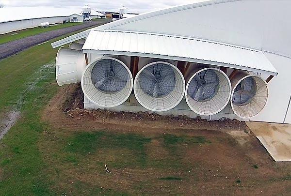 خنک سازی سالن مرغداری با استفاده از پد و هواکش