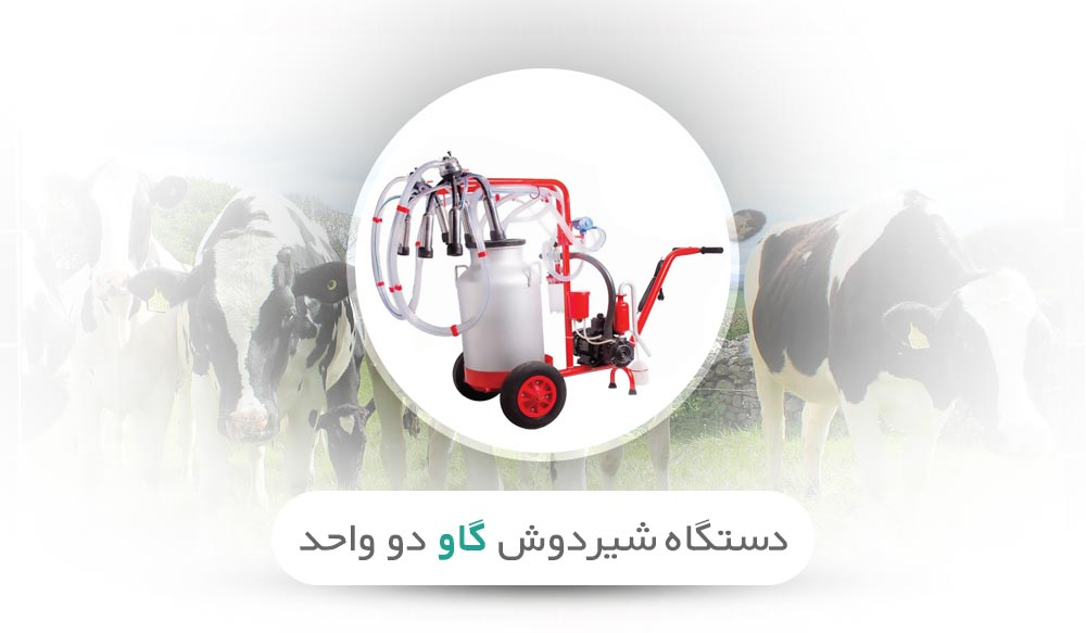 بررسی شیردوش گاو دو واحد دکتر قشلاق